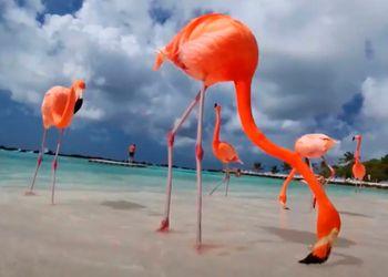 Flamingo Beach en Isla Renaissance