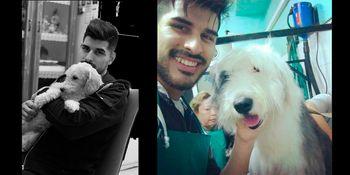 Requisitos para viajar con mascota • @jardines_y_mascotas_shop