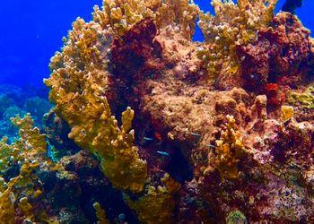 Buceo y Snorkel en Mangel Halto en Aruba