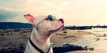• Viajar con mascota